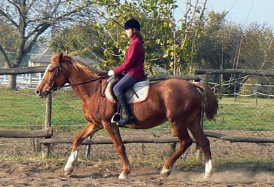 http://equestsport.com/system/lovak/mokka/mokka_nagy.jpg